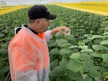 Family Fresh Farms among the first to benefit from effective new program to control thrips and whiteflies with an indigenous predator